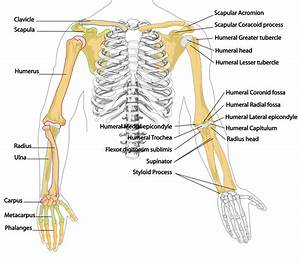 Christine Treadwell    Anatomy And Physiology