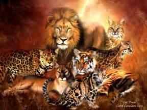 the big cat prides