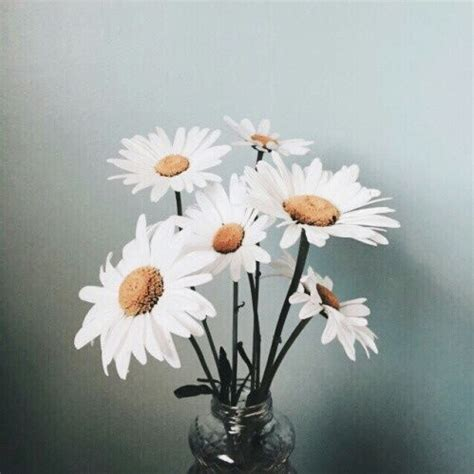 vintage daisies pictures   images  facebook