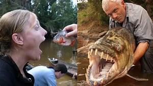 Tak Seganas dalam Film, Ini Fakta Sebenarnya dari Ikan ...