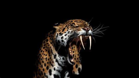 jaguar animal wild  photo  pixabay