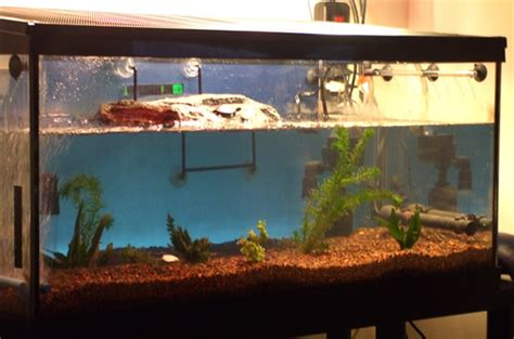 how to keep turtle tank clean maintaining water quality in your turtle s habitat