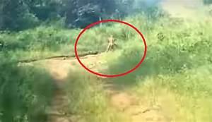 Strange (ALIEN?) creature capture on tape in Indonesia 22 ...