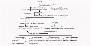 Pathophysiology Of Cancer Pain