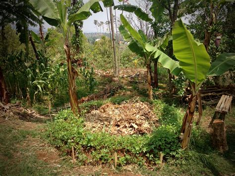Banana Circles » Blog Archive » The Permaculture Collective