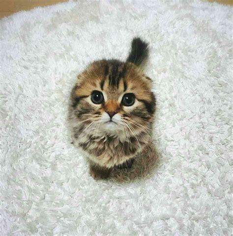 image de chat trop mignon images et photos
