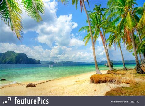nature landscape sunny tropics stock image