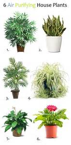1000 ideas about air purify plants on pinterest grow