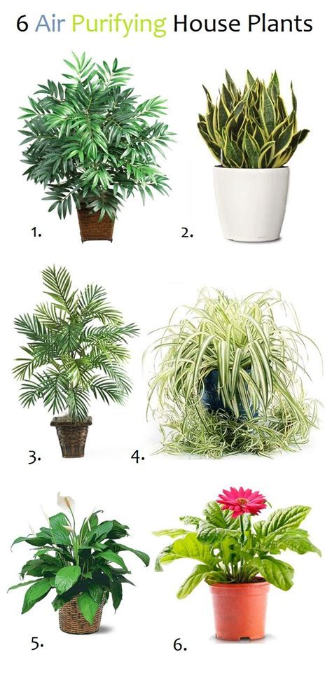 Plants For Bathroom India by 6 Air Purifying House Plants Plants Gardens