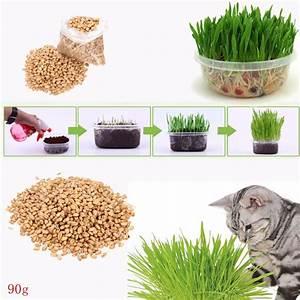 Graine Herbe A Chat : 90g pur naturel cultiv graines d 39 herbe d 39 avoine doux chat chien lapin pour animaux de compagnie ~ Melissatoandfro.com Idées de Décoration