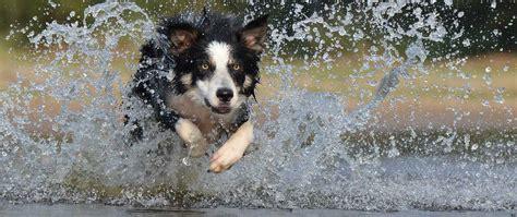 entwurmung bei hunden veteri