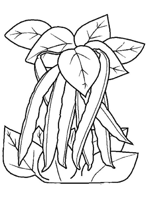 beans coloring pages   print beans coloring pages