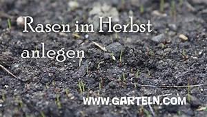 Rasen Düngen Herbst : rasen im herbst anlegen bei niedrigen temperaturen youtube ~ Watch28wear.com Haus und Dekorationen