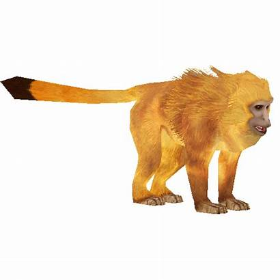 Tamarin Lion Golden