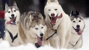 Human-dog bond dates back to ancient times, research shows ...