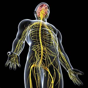 Pinched Nerve Left Side Of Body