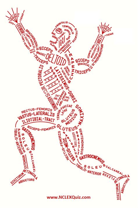 Luckily you've found this page to help you. How to Memorize All Muscle in the Human Body Easily ...