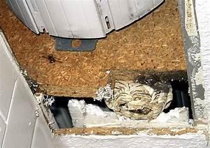 Wespen Im Rolladenkasten Entfernen : wespennest im mauerwerk wespennest eingang zumachen wespen nest wespennest im rollladenkasten ~ Frokenaadalensverden.com Haus und Dekorationen