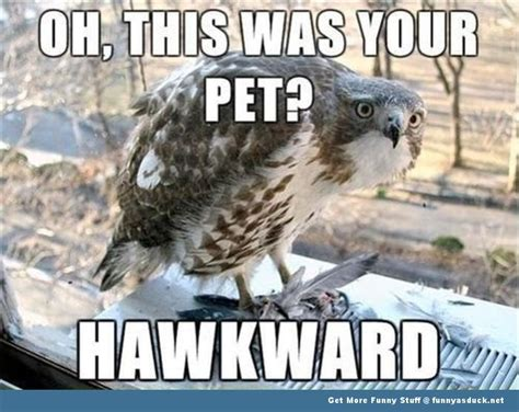 Bird Memes - funny animal memes animal meme hawk bird funny pics pictures pic picture image photo