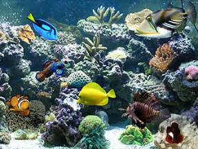 All Marine All Aquarium by An Introduction To Saltwater Aquariums Tc Pet Stop