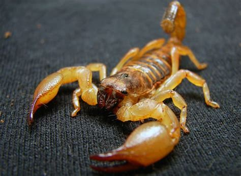 20 Amazing Animal Adaptations for Living in the Desert