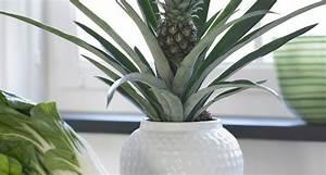 Regalare piante Piante da interno Regalare piante Appartamento