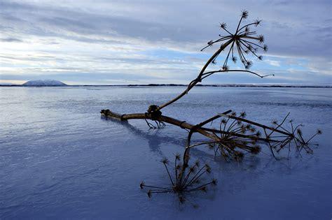 Eisiger Myvaten See Ohne Mücken