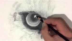 Leopard Eye Drawing  Time Lapse