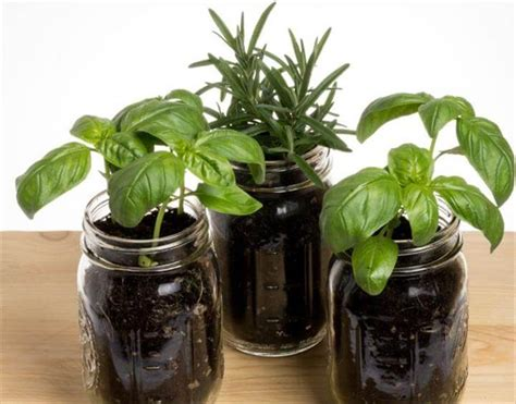 planter ideas   mason jars diy