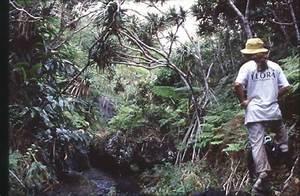 Flora Jungle Trekking Guide Activities Ogasawara Village ...