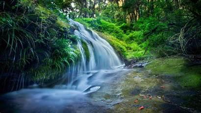 Forest 8k Rocks Nature River 4k Plants