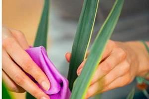 Läuse Natürlich Bekämpfen : yucca palme sch dlinge erkennen und bek mpfen palmlilie ~ Whattoseeinmadrid.com Haus und Dekorationen