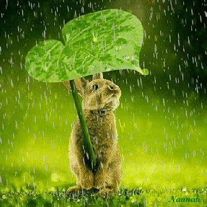 dreamiesde mit bildern animation regenwetter