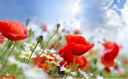 Bunga Gambar Indah Cantik Yang Kumpulan Dan