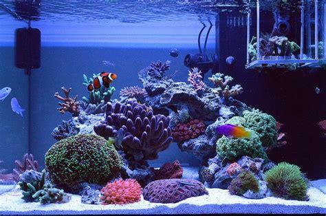 saltwater aquarium aquascape designs 123 best images about aquarium ideas on aquascaping and reef aquascaping
