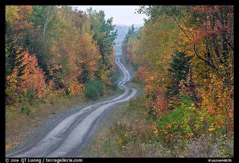 High Resolution Fall Foliage Pictures Picture Photo North Woods In Autumn With Twisting Unimproved Road Maine Usa