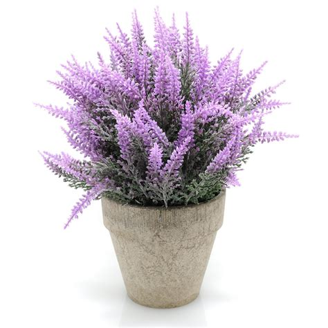 lavender plants buy the 10 best artificial plants to use by your swimming pool