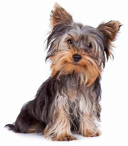 Small Dog Names: Cute Male And Female Little Dog Names