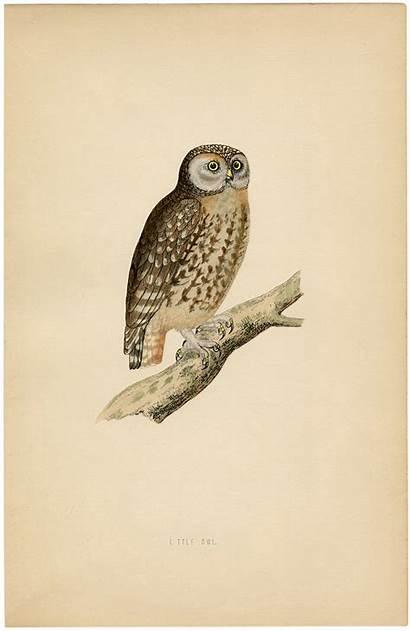 Owl Printable Halloween Prints Fairy Thegraphicsfairy Graphics
