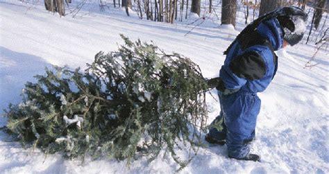 christmastree farms philadelphia where to your own tree in philadelphia homes for sale in philadelphia atacangroup