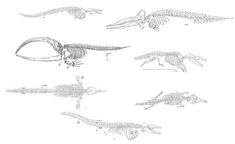 dinosaurs cad drawing