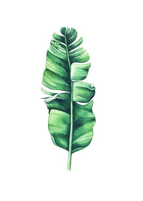 banana leaf aquarelle poster