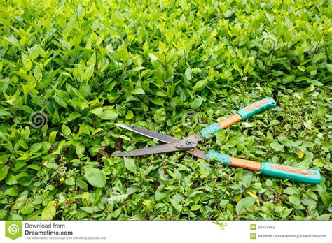 trimming bushes trimming shrubs scissors stock photo image of leaf hedge