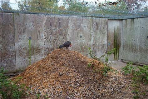 turkey brush bird nests mound incubator megapode nest australian australia a7 pool birds wonder eggs ready looks informasi dikongsi bersama