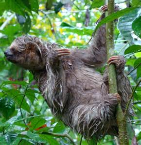 Animals of Costa Rica Photos - Tree Houses Hotel Costa Rica - Hotel ... Costa Rica