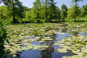 kenilworth aquatic gardens water lilies in washington kenilworth aquatic gardens