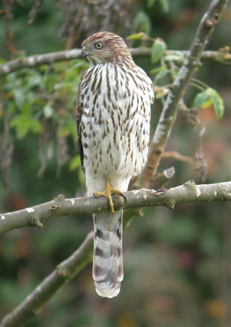 british columbia bird