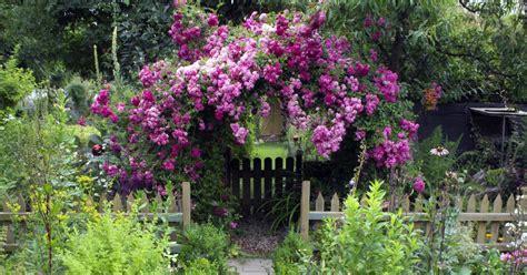 Kletterpflanzen Mit Blüten by Kletterpflanzen F 252 R Sonne Und Schatten Mein Sch 246 Ner Garten