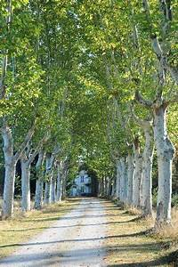 The well planned environment ... Tree-lined country road ...