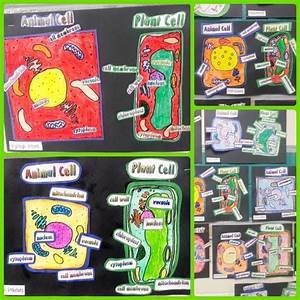 26 Best Plant And Animal Cells      5th Grade Images On